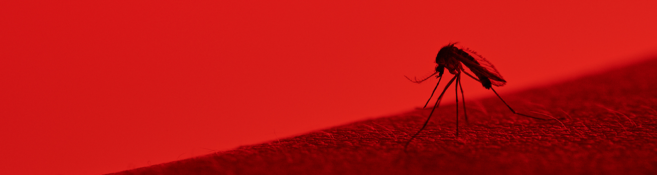 An enlarged mosquito on a red background